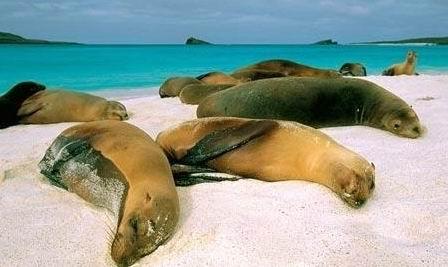 半圆海洋动物简笔画